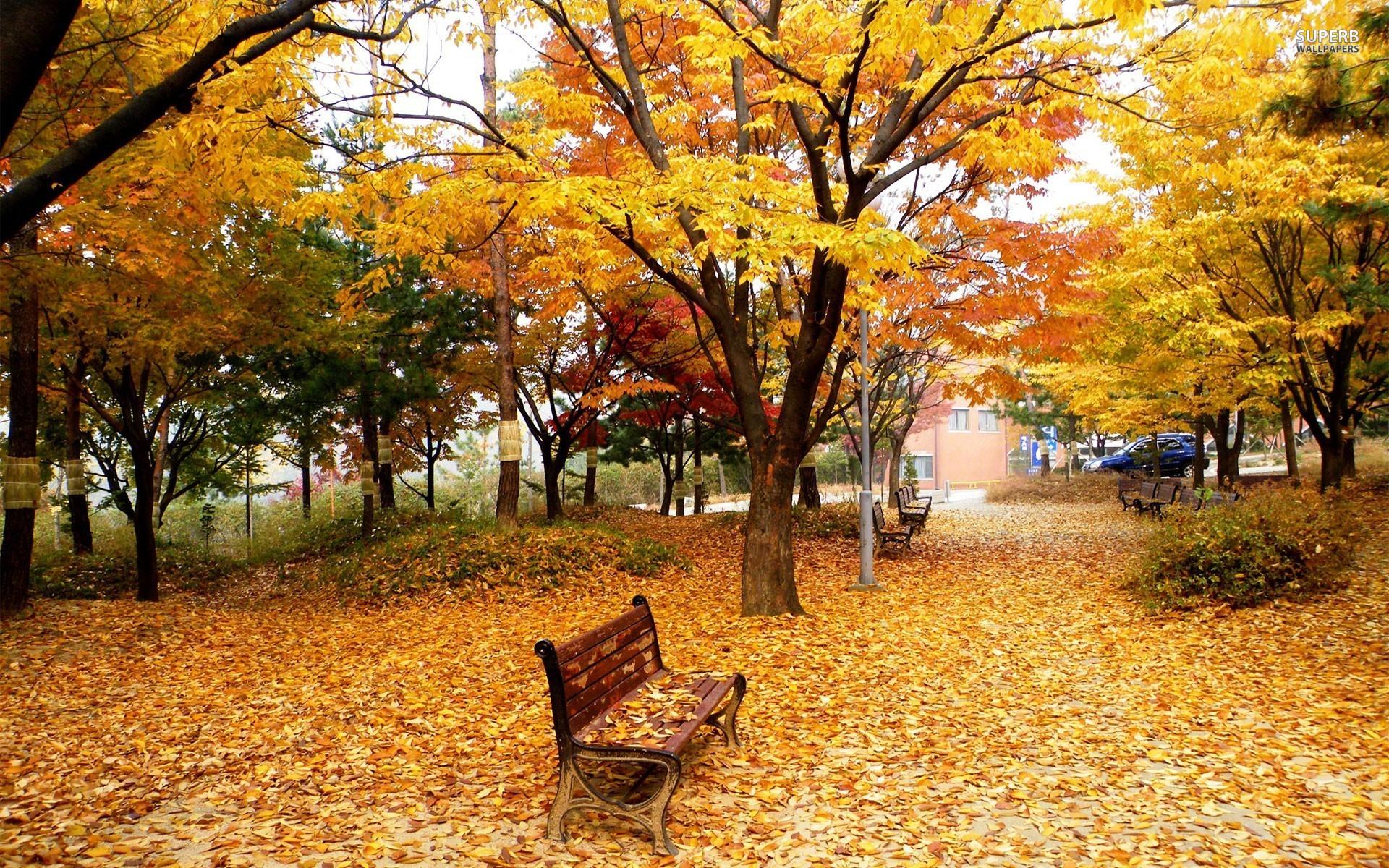 jesen u parku sastav