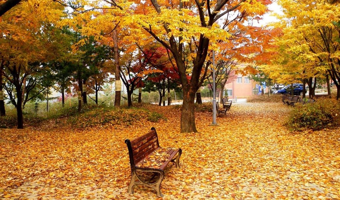 jesen u parku