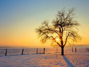 zimsko jutro