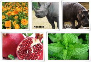 biljke i zivotinje na slovo n
